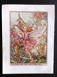 Cicely Mary Barker C1940s Flower Fairy Print. Rose Bay Willow-Herb Fairy